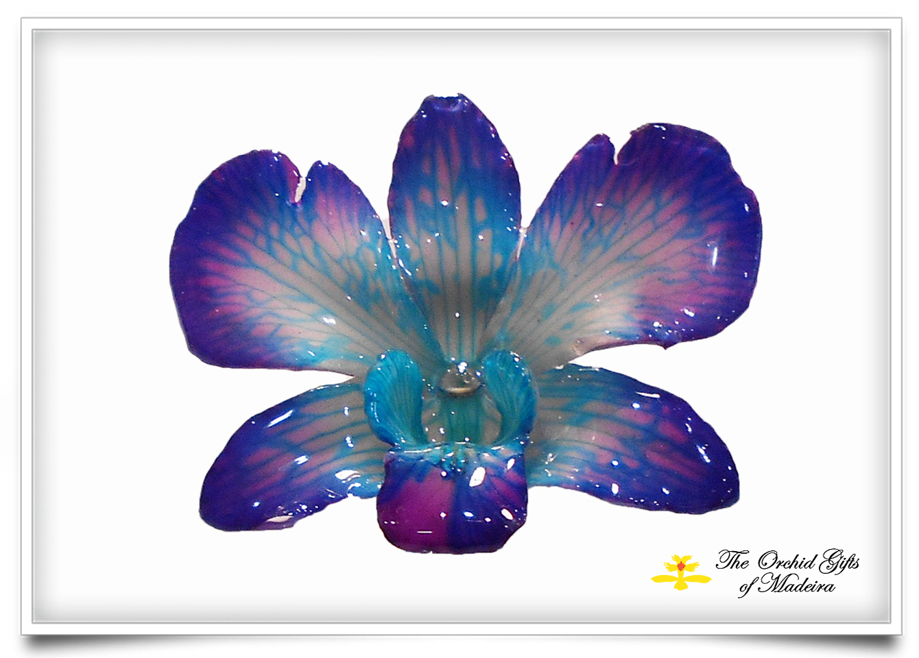 Orchid Dendrobium Pendant Brooch Blue Purple The Orchid Gifts
